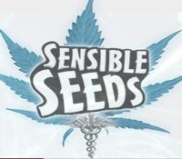 Sensible Seeds – Buy 1 Get 1 FREE Premium Seeds