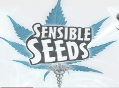 Sensible Seeds – Buy 1 Get 1 FREE Premium Seeds